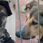 Grupo Lince abandona a Max, el perro que adoptaron